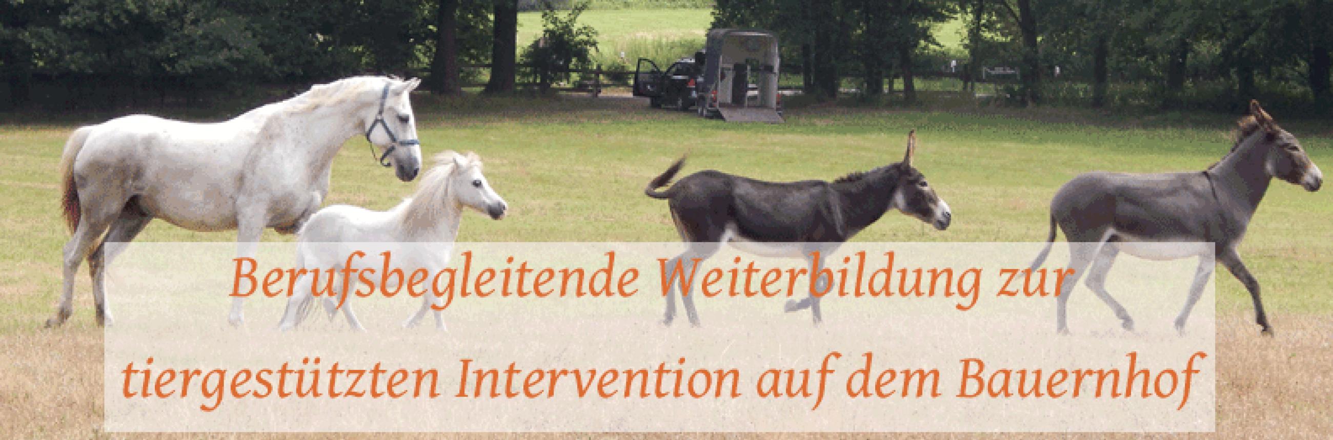 Ausbildung tiergestützte Intervention mit Bauernhoftieren